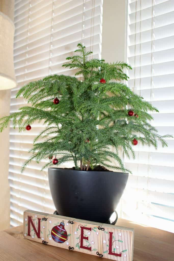 Decorate for Christmas with plants