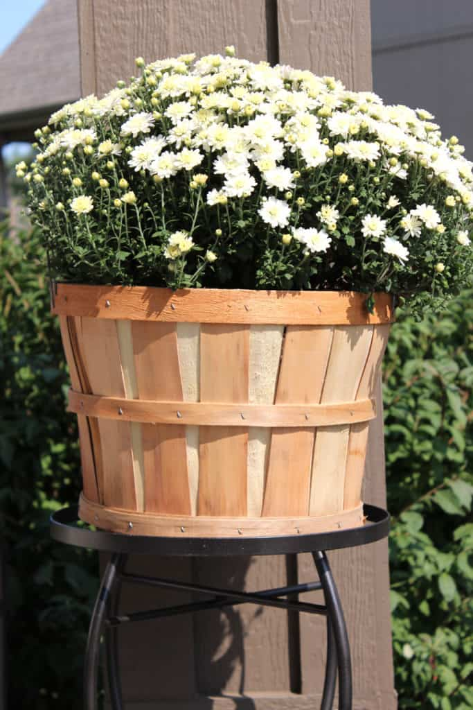 White mum, apple basket with mum, autumn front porch decor
