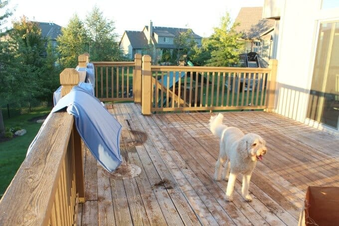 Deck with golden doodle in the background.