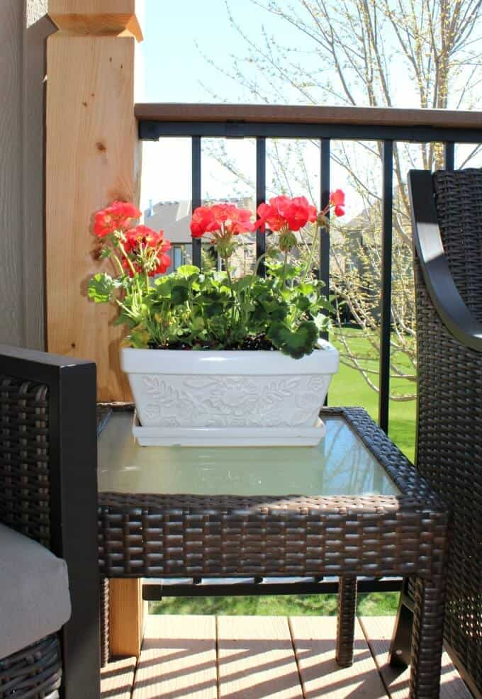 Geraniums are great flowers for west facing planters