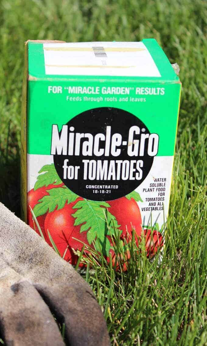 Use Miracle Grow for tomatoes for bigger and healthier tomatoes and vegetables.