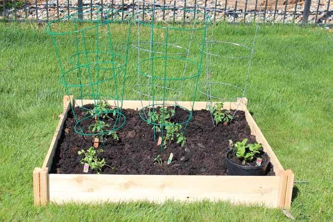 Tomatoes, cucumbers, cilantro, sweet mint in a small raised bed garden. #gardening #gardenideas