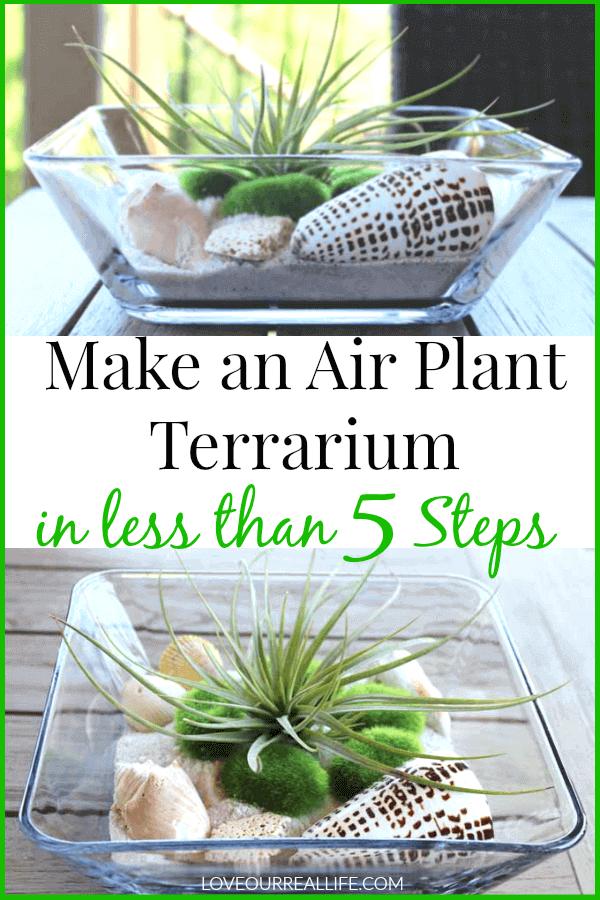 Air plant terrarium displayed on teak table.