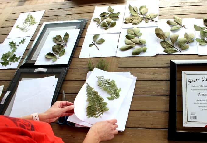 Pressed leaves from our backyard trees will make very personal (and easy!) DIY home decor.