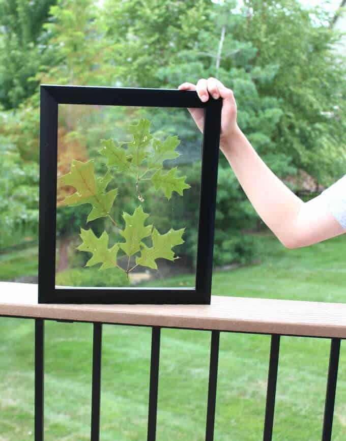 Pressed leaves from our yard in a certificate / document frame. A perfect way to display personal items in your home!