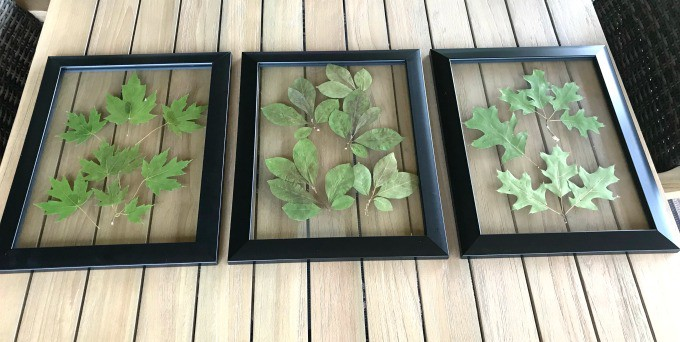 Pressed leaves in document frames. An inexpensive way to personalize home decor on a dime. Plus it's pretty!