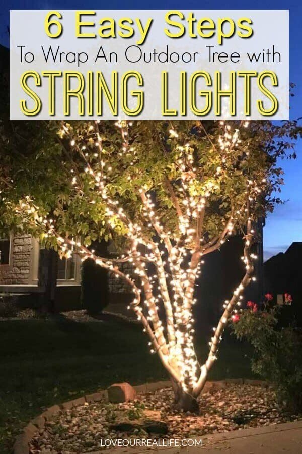 string lights on an outdoor maple tree by a driveway at night.