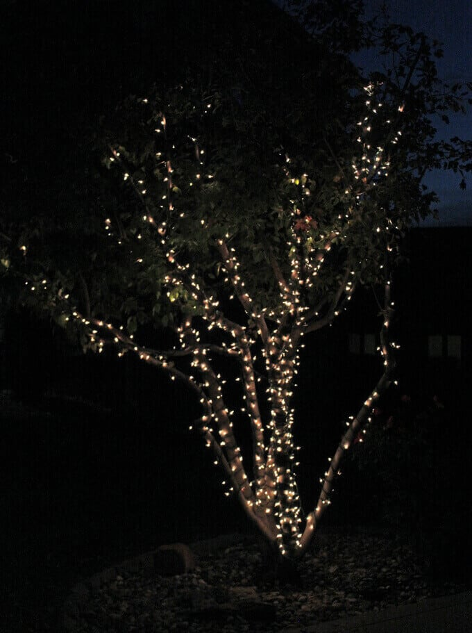String lights wrapped tightly on small tree shown at night.