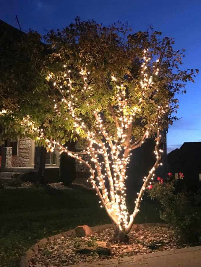 String lights lit up on ornamental tree at night.