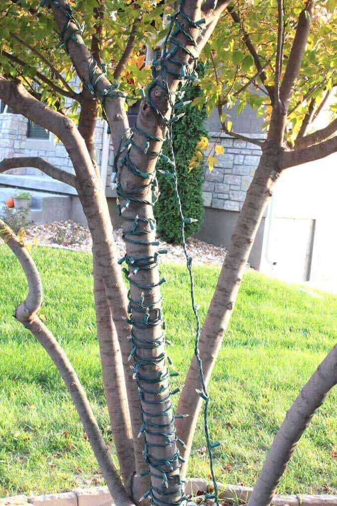 Closely wrapped sting lights on outdoor maple tree.