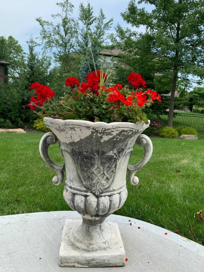 Red geraniums how to decorate a deck or patio with flowers