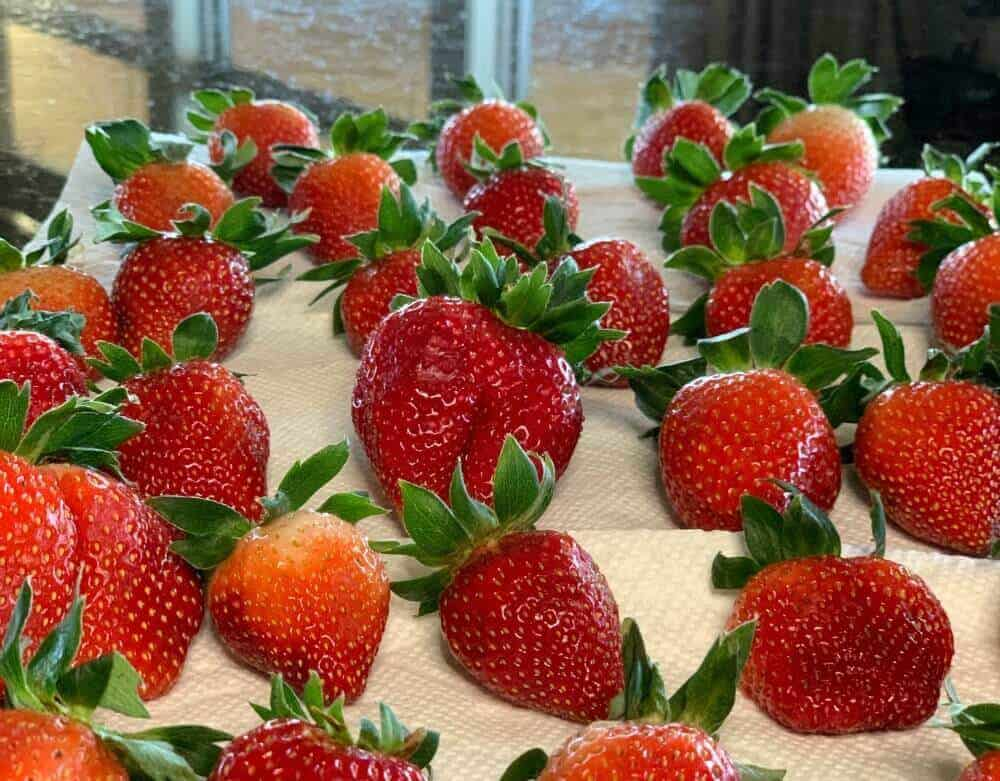 wash and dry strawberries