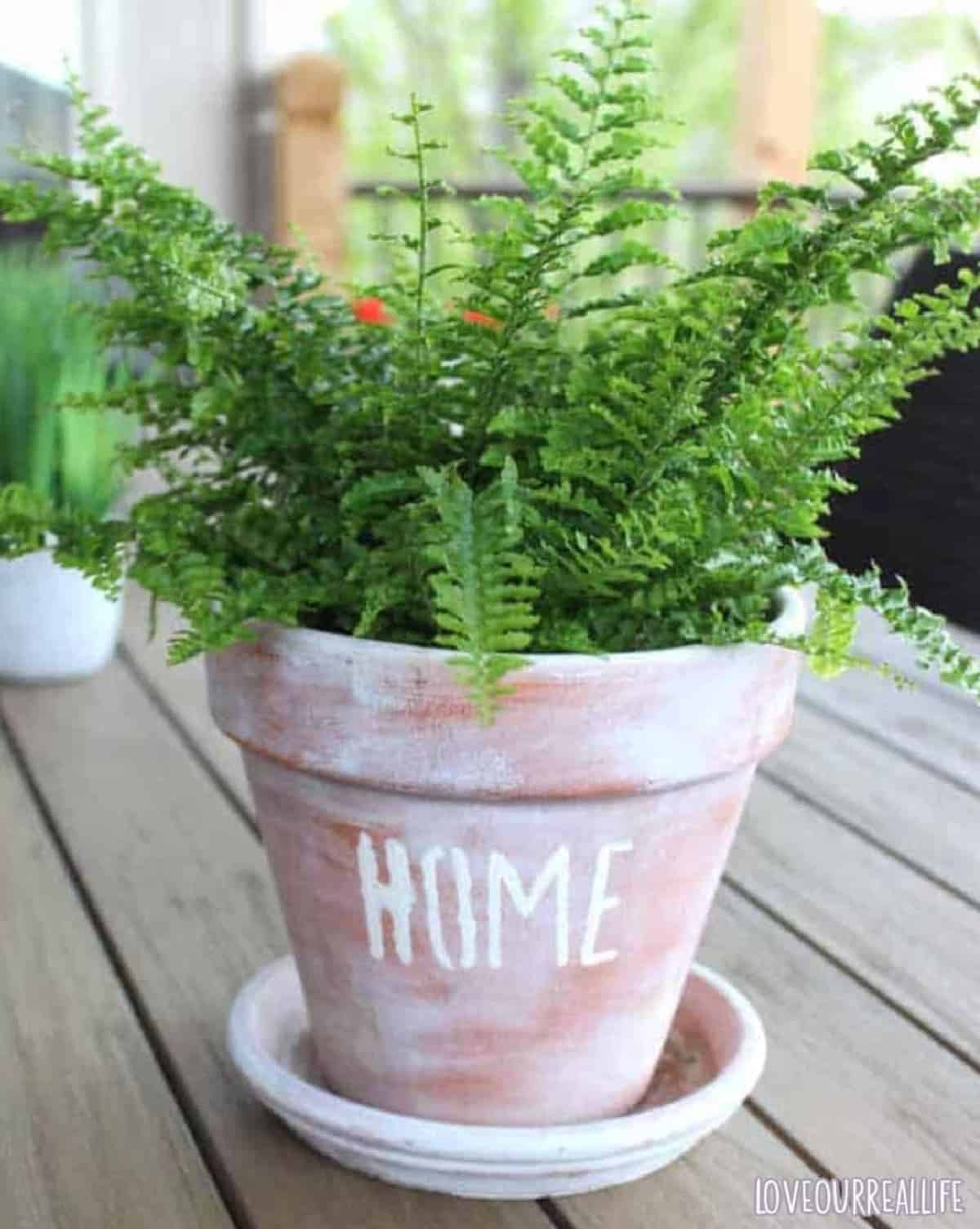 """A whitewashed terracotta pot with stenciled """"home"""" on front with a small fern plant inside pot."""