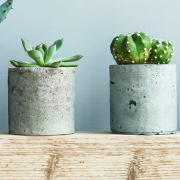 Two succulents in concrete pots on table.